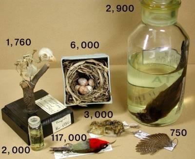 Статья 29. Зоологические коллекции