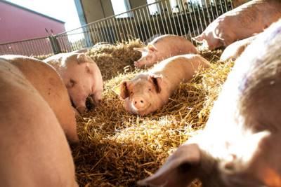 Статья 19. Изъятие животных и (или) продуктов животноводства при ликвидации очагов особо опасных болезней животных