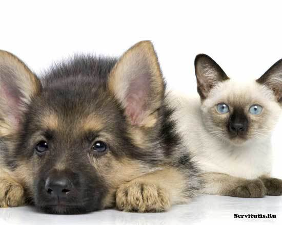 Статья 1.1. Специалисты в области ветеринарии
