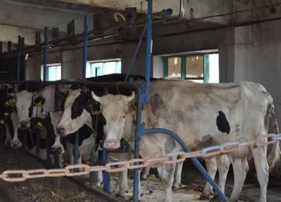 Статья 37. Заявка на проведение искусственного осеменения сельскохозяйственных животных