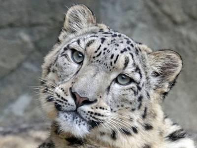 Статья 10. Участие граждан и юридических лиц в охране и использовании животного мира, сохранении и восстановлении среды его обитания