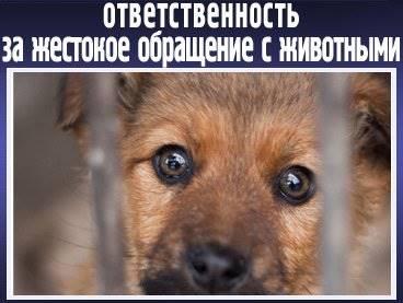 Глава VIII. Ответственность за нарушение законодательства российской федерации об охране и использовании животного мира