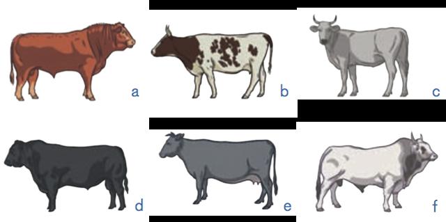 Статья 26. Оценка племенных животных-производителей