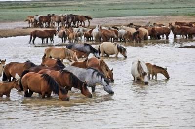 Статья 1. Задачи племенного животноводства
