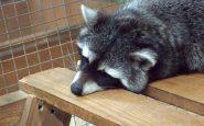 Раздел VI. Ответственность за нарушение ветеринарного законодательства российской федерации