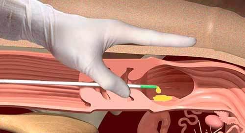 Глава VII. Искусственное осеменение сельскохозяйственных животных и трансплантация эмбрионов