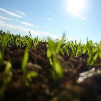 Статья 12.1. Невостребованные земельные доли